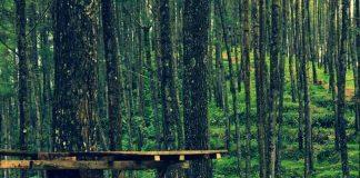 Tempat Wisata Di Purworejo