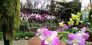 Orchid Forest Cikole Lembang Bandung