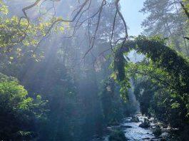Taman Hutan Raya Ir H Djuanda Bandung