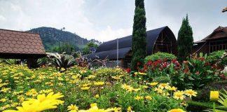 Tempat Wisata Kebun Begonia Lembang Bandung