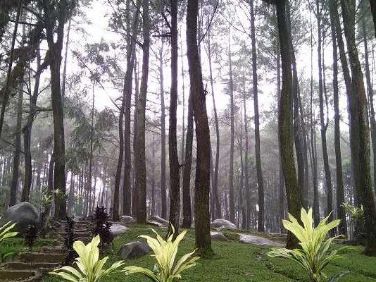 Taman Wisata Alam Gunung Pancar Bogor